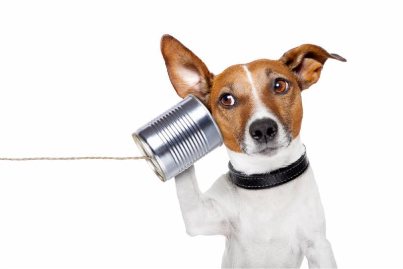 Dog listening tin can